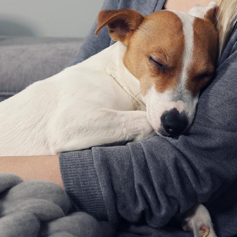 A dog sleeping