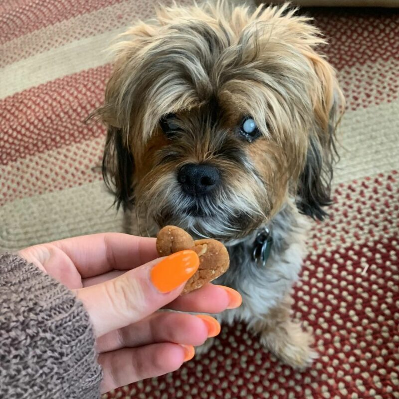 dog treats for a blind dog